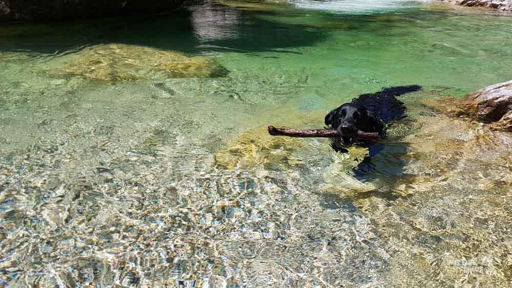 Flussbaden Ötschergräben