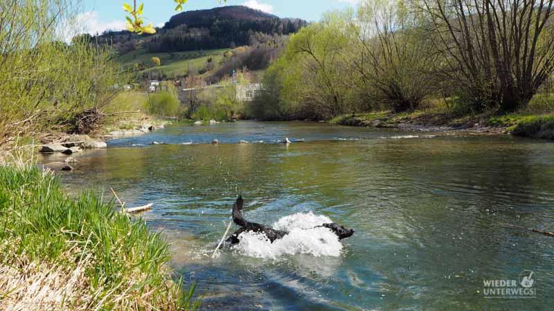 Baden mit hund im PIelachtal flussbaden