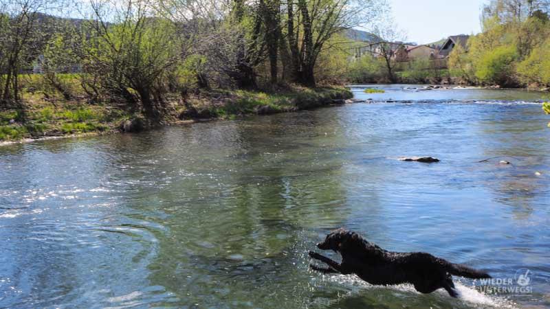 pielachtal hund baden