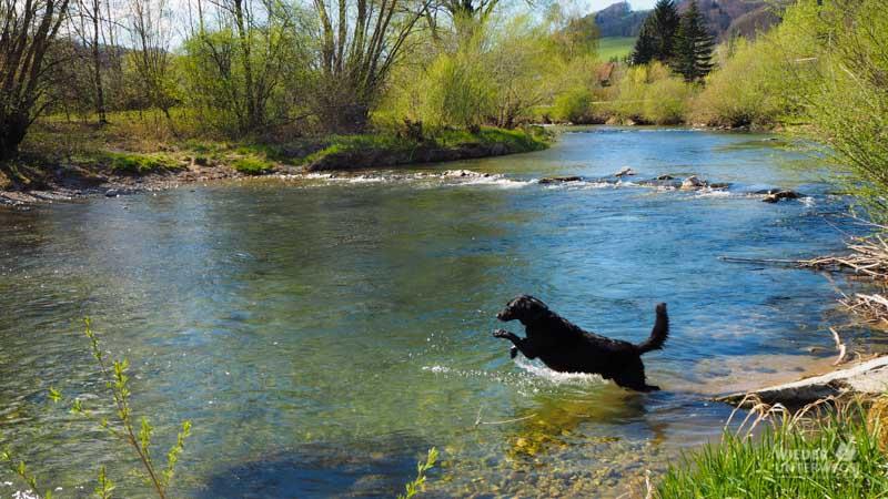 baden mit hund im pielachtal