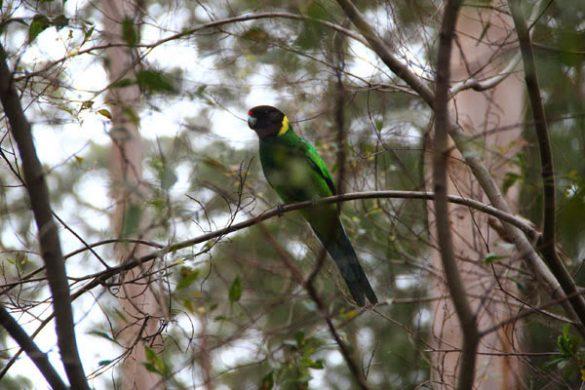 Südsüdwesten Australien (1)