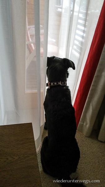 Hund Hochschober Zimmer