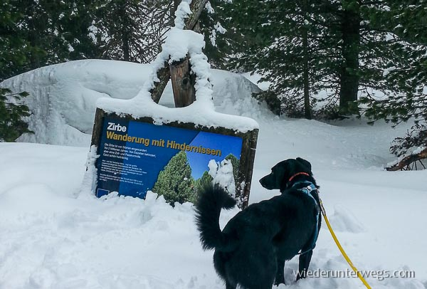 Hund im Schnee im Hochschober