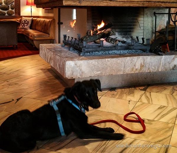 Hund Hochschober in der Lobby