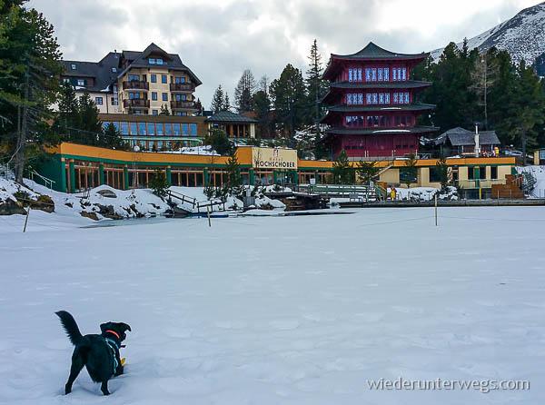 Hund vor dem Hotel Hochschober