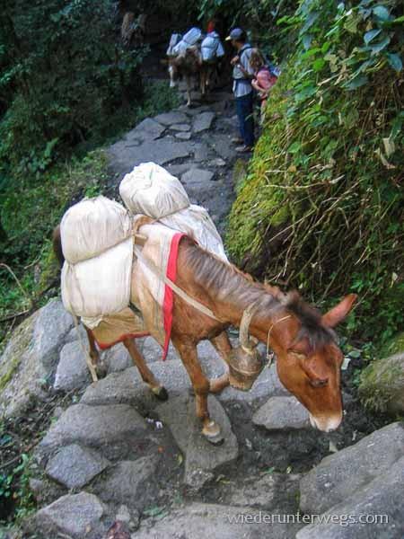 pferd nepal trek