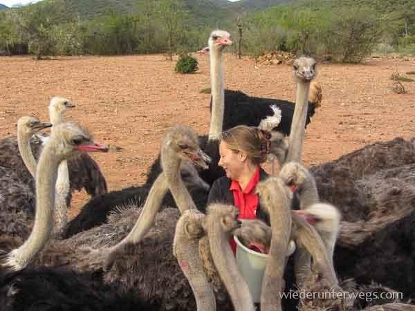 straussen südafrika (5 von 16)