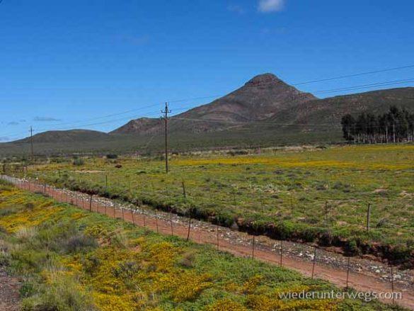 Zug Südafrika (17 Von 32)