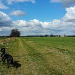 Von WeinbergWalks und HundeWeiterbildung.