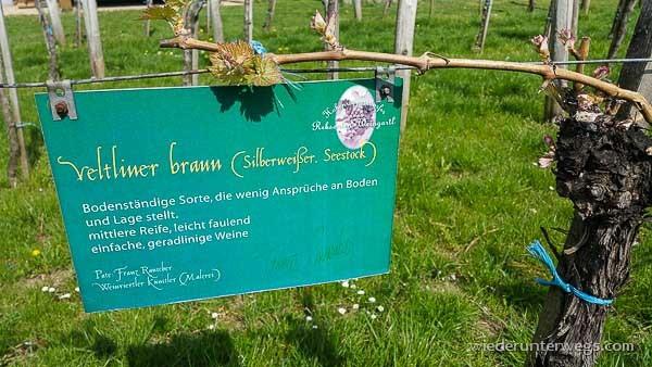 Wonneviertel Weinviertel Mai 2015 (23 von 39)