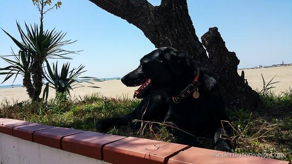 Caorle Hund im Schatten