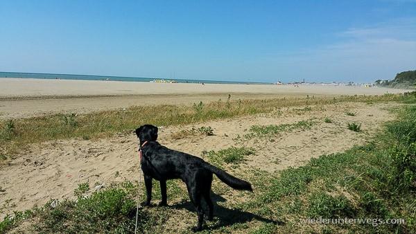 Caorle Strand Hund
