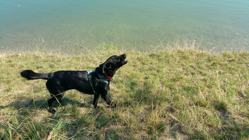 hund am badeteich süßenbrunn