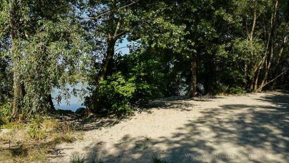 Donauinsel Hundebaden August 2015 (5 Von 11)