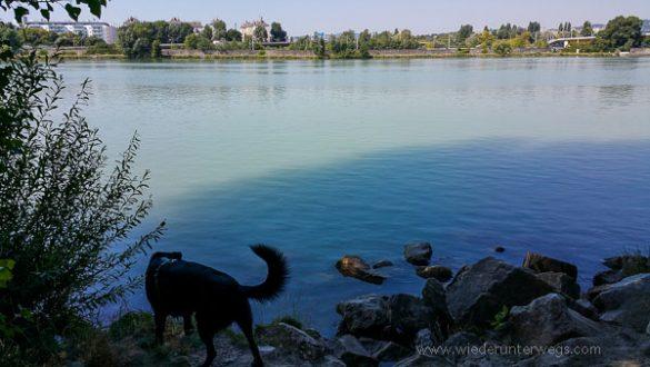 Donauinsel Hundebaden August 2015 (6 Von 11)