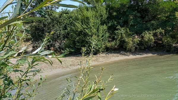 Donauinsel Hundebaden August 2015 (8 von 11)