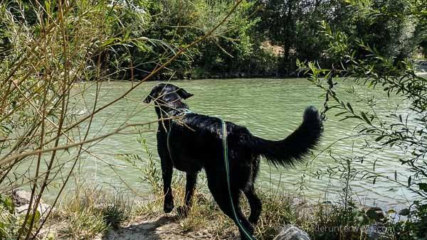 Donauinsel Hundebaden August 2015 (9 von 11)