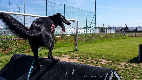 Hundetag (20 von 39)