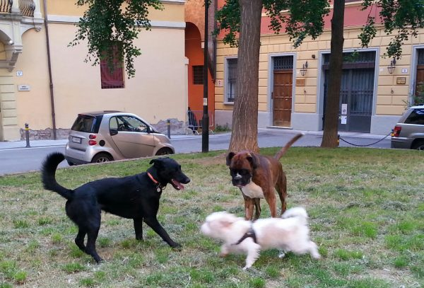 Urlaub mit Hund Bologna