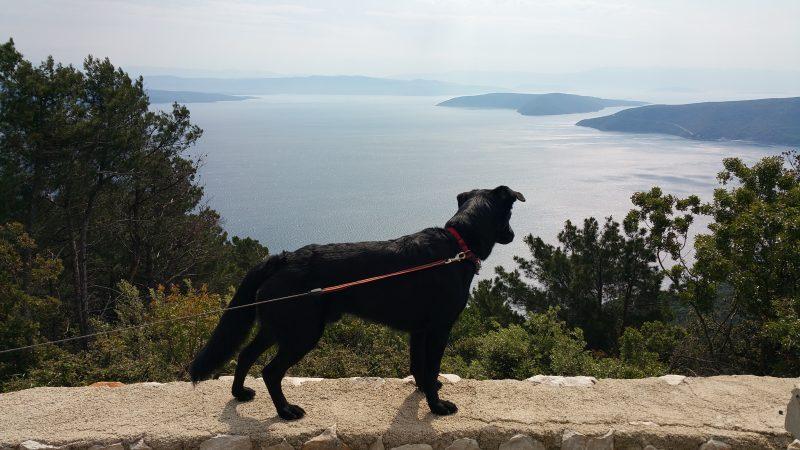Urlaub mit Hund Cres