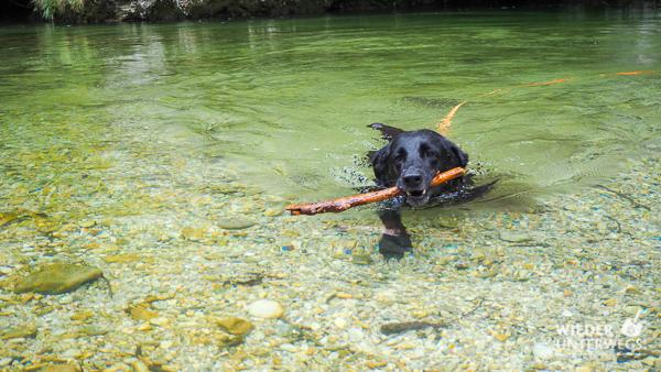 wiener alpen hund baden fluss