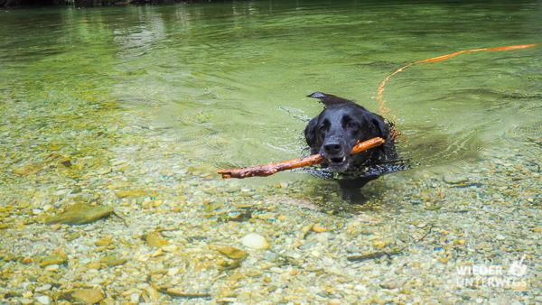 wasserung hund am wasserleitungswanderweg