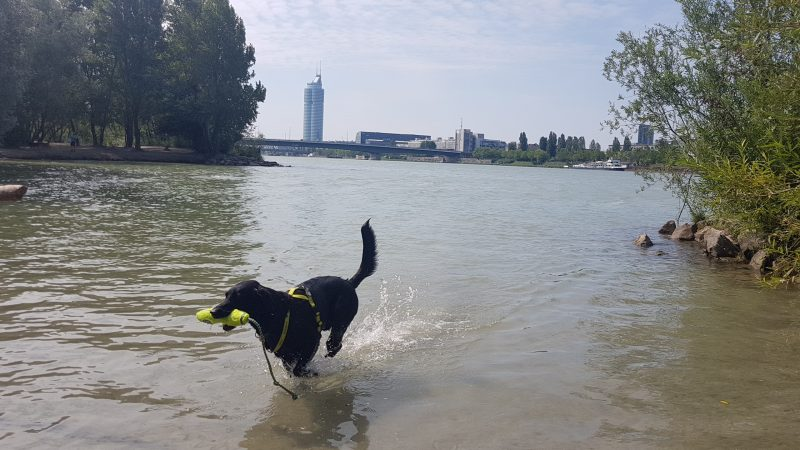 Hundezone Donauinsel mit Millennium Tower