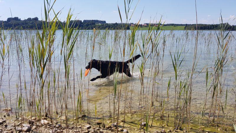 Hund in Salzburger See