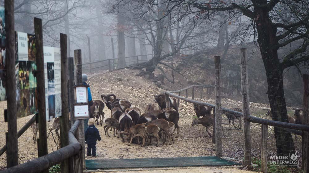 Fütterung Wildpark Ernstbrunn