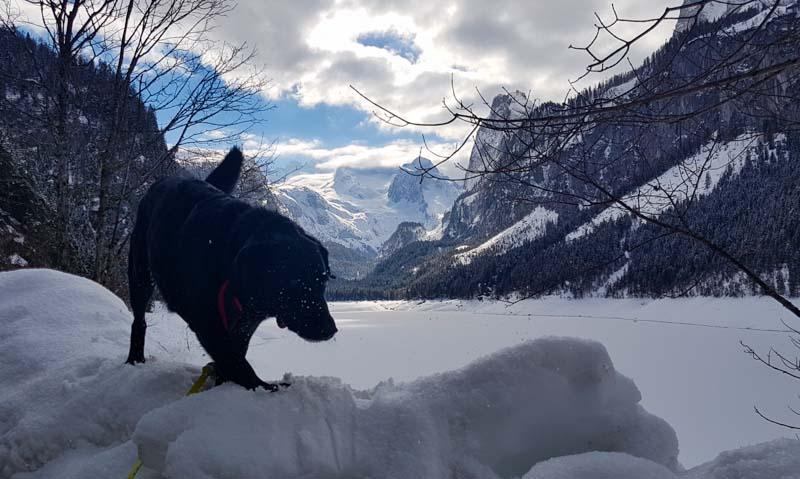 Gosau Krippenstein Hallstättersee Ausflug gosau hund see