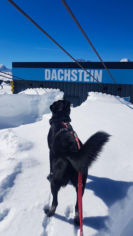 Gosau Krippenstein Hallstättersee Ausflug krippenstein hund