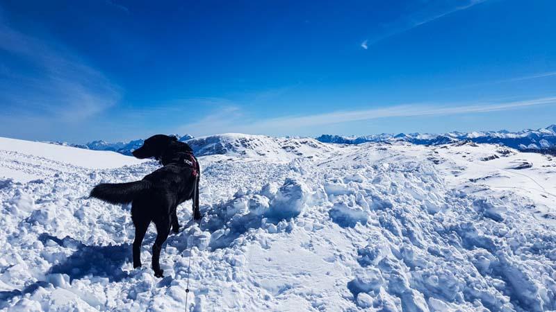 Schnee krippenstein hund Gosau Krippenstein Hallstättersee Ausflug