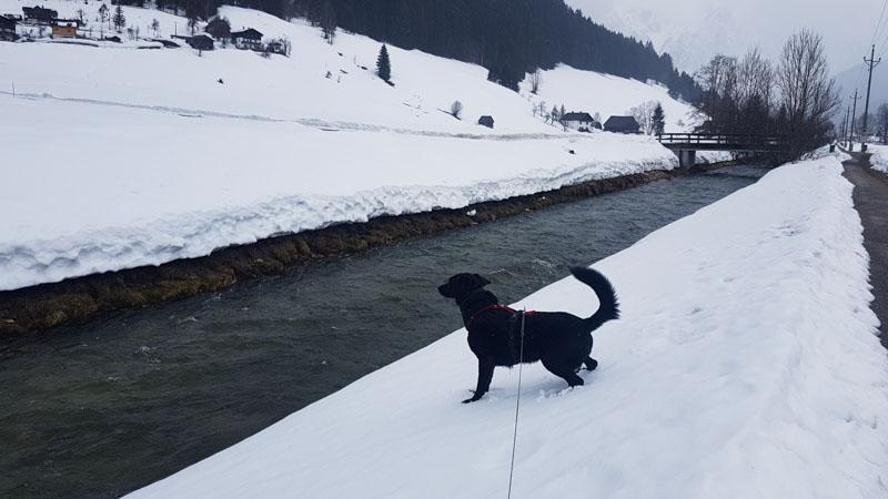 Gosau Krippenstein Hallstättersee Ausflug Flusswanderweg hund