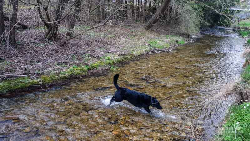 steinschalerhotel hundebaden fluss