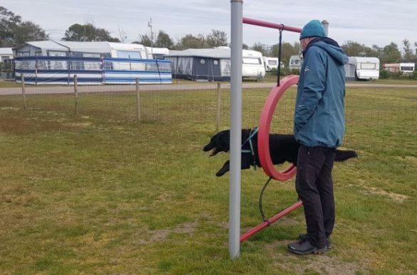 Agility mit Hund in Schweden