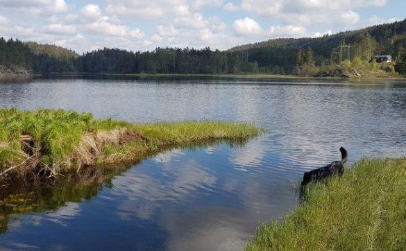 Camping mit Hund Norwegen