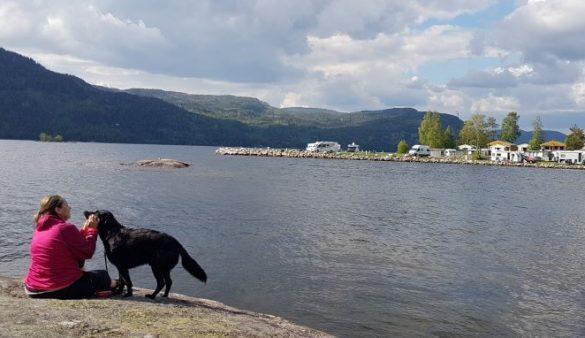 Hund Campinglatz Norwegen