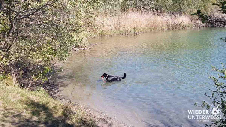 Bad im Teich Süßenbrunn