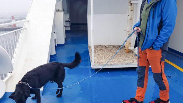 Fähre Schweden Hund Trelleborg Rostock Web (40 Von 56)