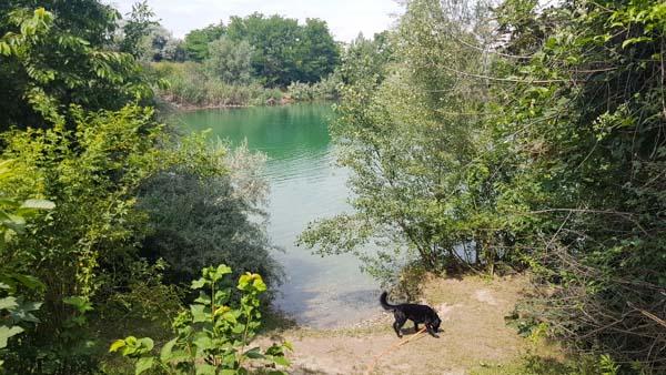 Süßenbrunner Badeteich Hundezone Wien22 Web (21 Von 59)