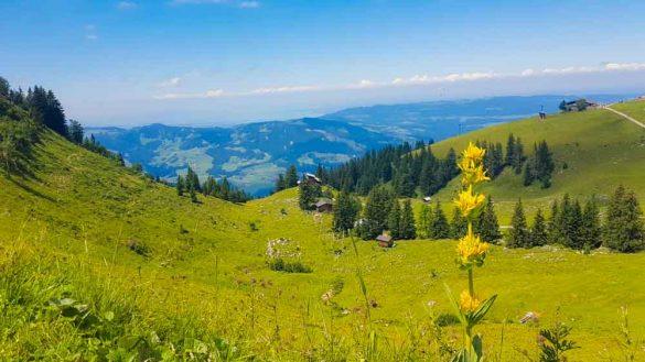 Bregenzerwald Web (226 Von 421)