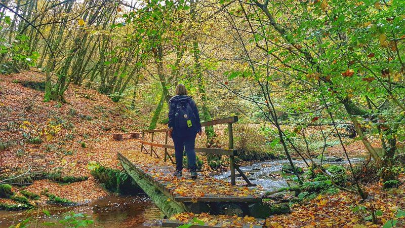 Wandern in der baybachklamm im hunsrück nahe hängebrücke