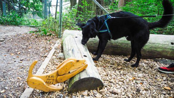 Bärenwald Arbesbach Waldviertel Mit Hund Ausflugsziel Web  17