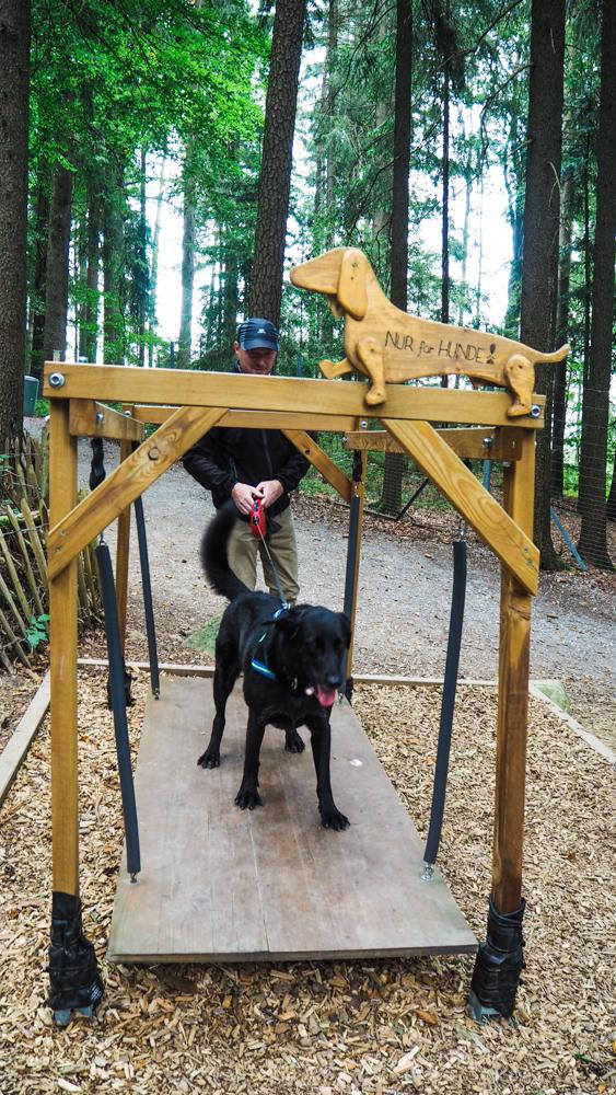 Bärenwald Arbesbach Waldviertel Mit Hund Ausflugsziel Web  20