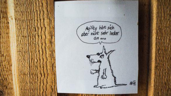 Bärenwald Arbesbach Waldviertel Mit Hund Ausflugsziel Web  29