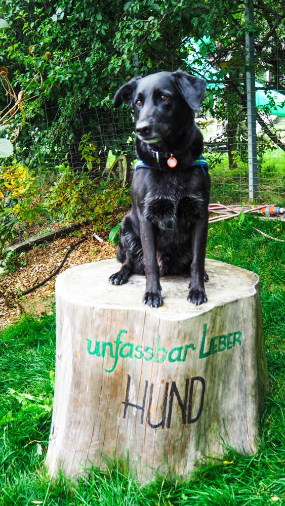 Bärenwald Arbesbach Waldviertel Mit Hund Ausflugsziel Web  40