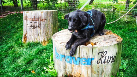 Bärenwald Arbesbach Waldviertel Mit Hund Ausflugsziel Web  42