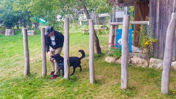 Bärenwald Arbesbach Waldviertel Mit Hund Ausflugsziel Web  50