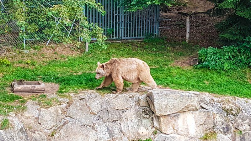 bären arbeswald