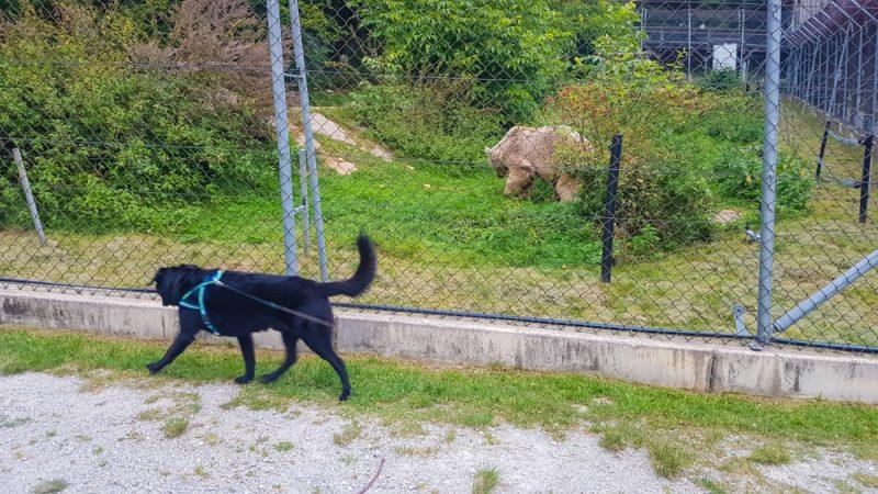 Mit Hund im bärenwald arbesbach